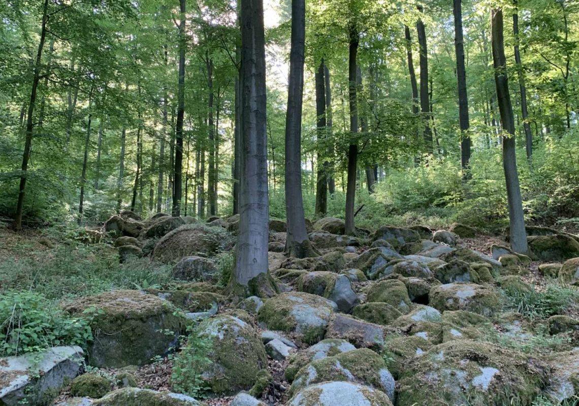 Ferienpark Hesselhof - Ferienwohnungen und Wellnessanlage in Rimbach, Odenwald (Foto 24)