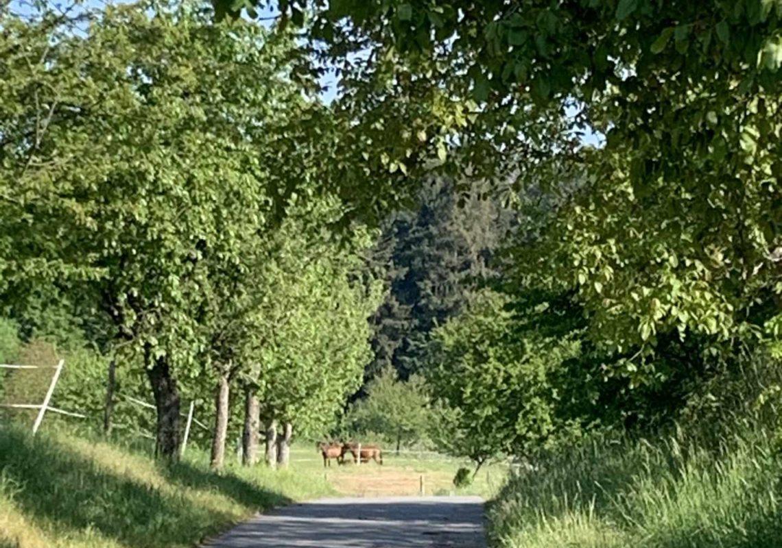 Ferienpark Hesselhof - Ferienwohnungen und Wellnessanlage in Rimbach, Odenwald (Foto 26)
