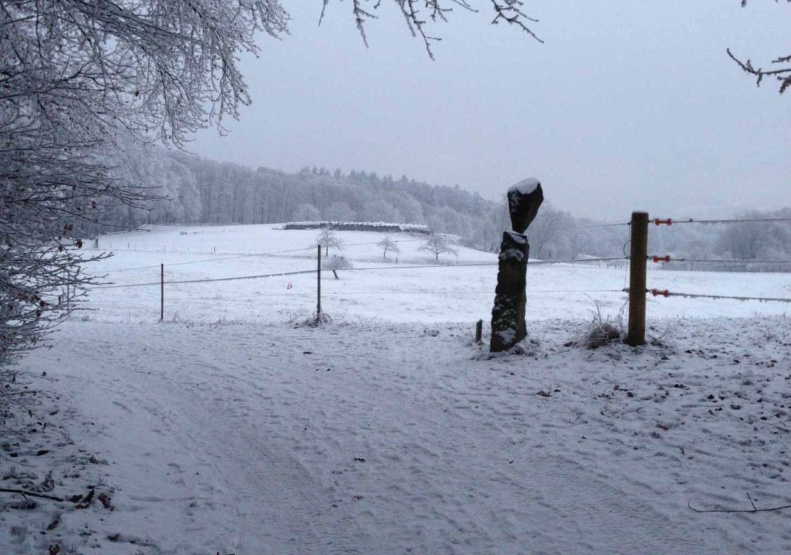 Ferienpark Hesselhof - Ferienwohnungen und Wellnessanlage in Rimbach, Odenwald (Foto 36)